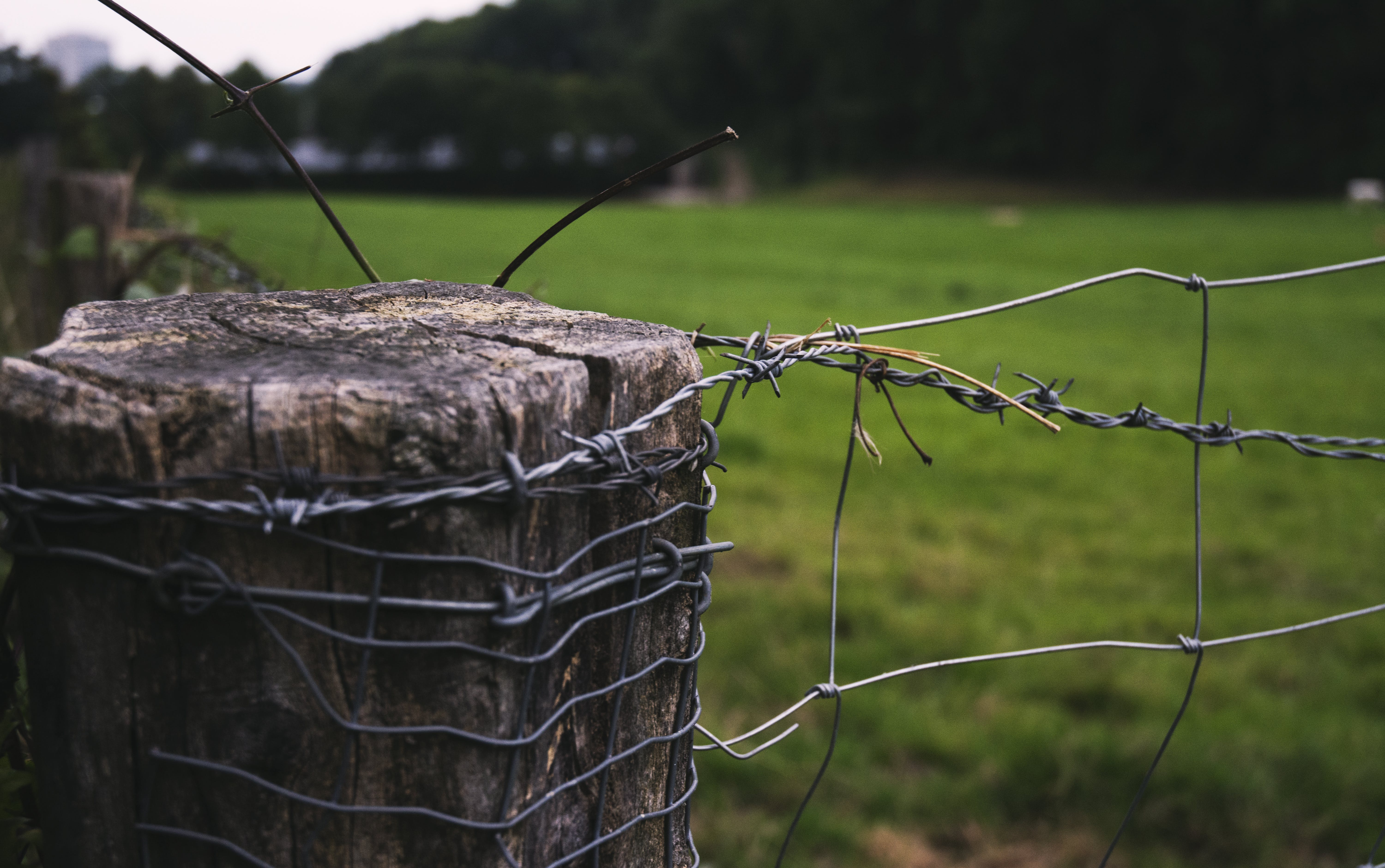 Free stock photo of barbed wire, fence, gras, wood