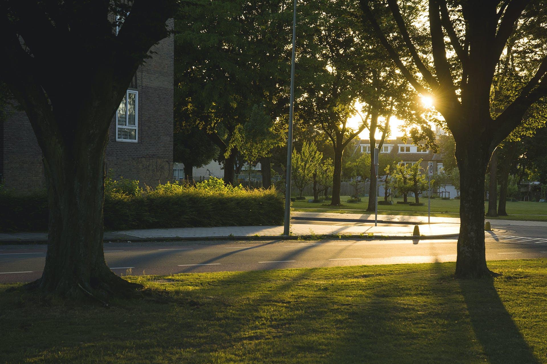 Kostenloses Stock Foto zu abendsonne, bäume, sonnenlicht, stadt