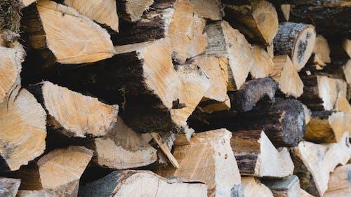 Foto profissional grátis de árvores, de madeira, floresta, madeira