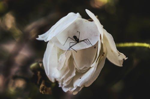 昆蟲, 美丽的花, 花, 花卉 的 免费素材图片