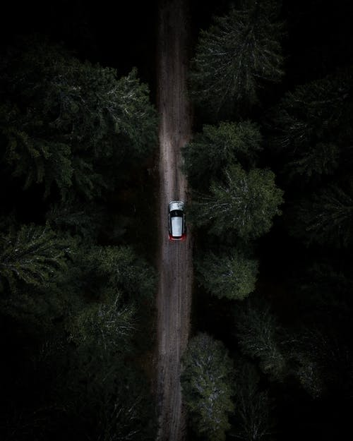 White and Black Car on Road in Between Green Trees
