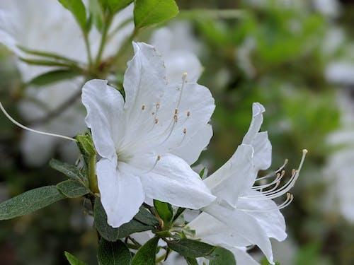 Free stock photo of bloosom, flower, flowers, nature