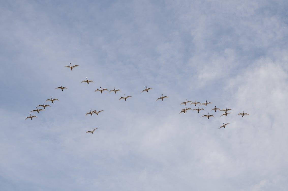 Free stock photo of air, airplane, bird