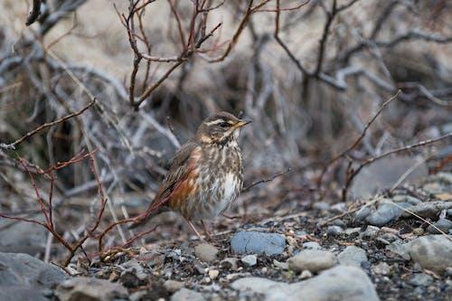 Brown Bird on Gray Rock