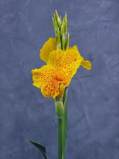 Fotos de stock gratuitas de flor, flor amarilla, jardín