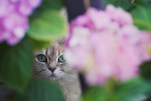 Adorable curious cat in blooming garden