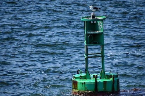 Free stock photo of buoy, ocean, wallpaper, water