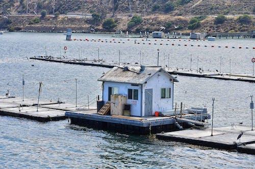 Kostnadsfri bild av båthus, vatten