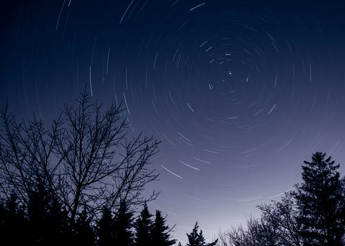 Starry night sky above trees