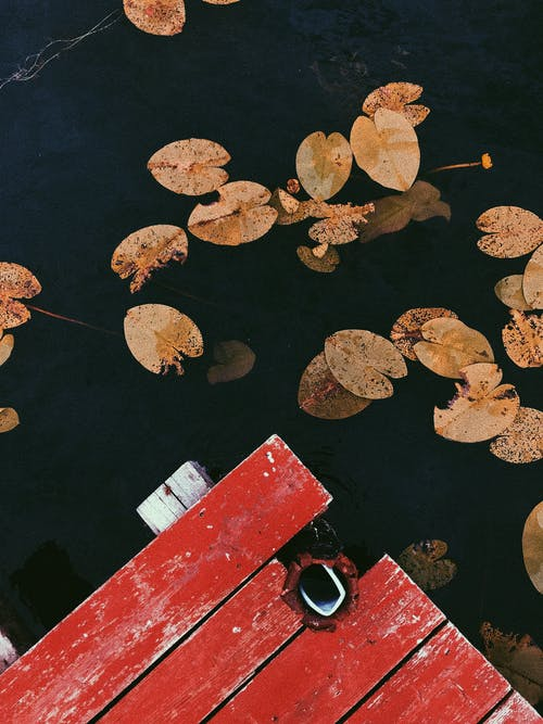 Old wooden pier of pond with yellow water lilies