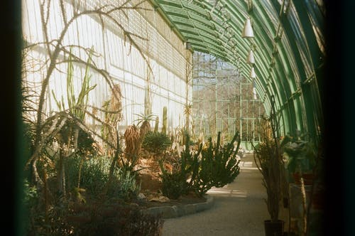 Blooming greenhouse of diverse exotic plants