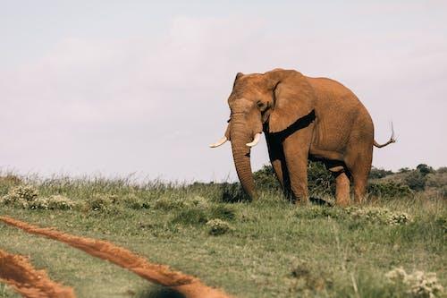 Brown Elephant on Green Grass Field