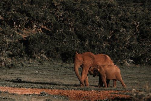 Fotos de stock gratuitas de alimentación, alimentando, animal, árbol