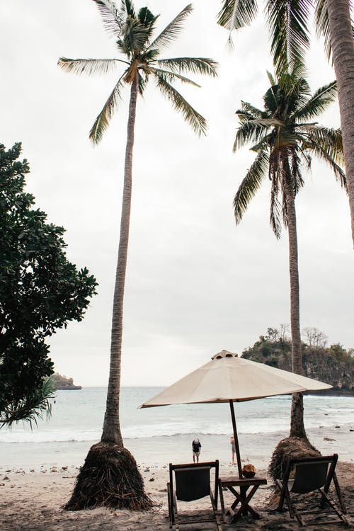 Chairs under umbrella and palms on coast of sea