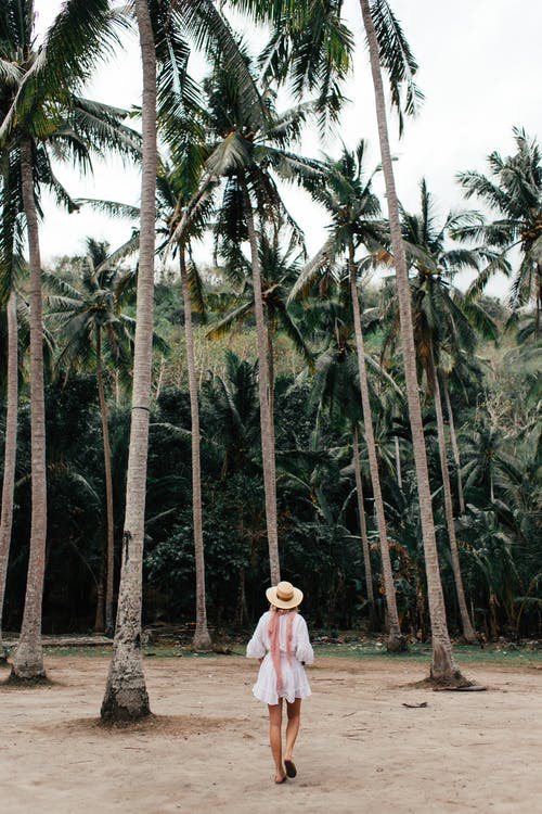Full body back view of faceless female in sundress and hat walking on light beige sand under tall trees with dark green foliage in summertime