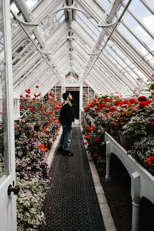 Woman in hothouse with blooming flowers