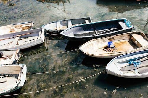 冷靜, 划船, 反射, 和平 的 免费素材图片