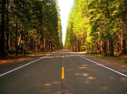 Photos gratuites de arbres, forêt, nature, route