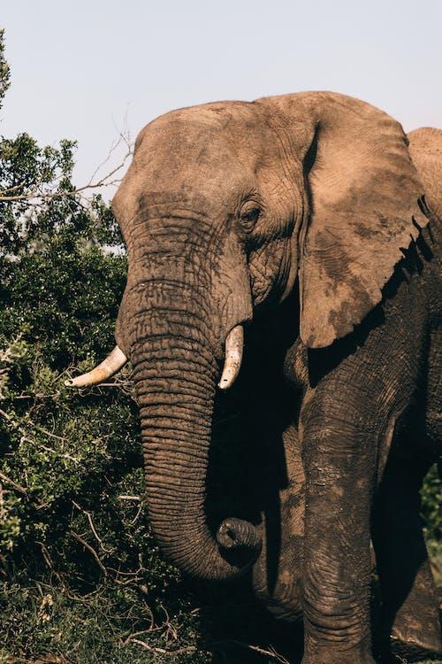 Elephant with long trunk near shrub on summer day
