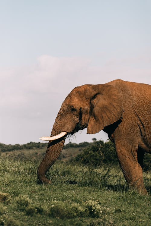Elephant grazing in pasture under cloudy sky