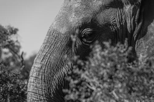 Muzzle of powerful elephant among shrubs in daylight