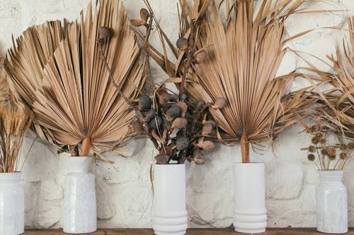 Collection of dry plant leaves in vases on white background