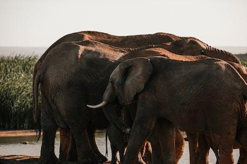 Elephants walking near water on hot day