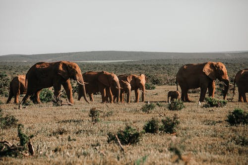 , fil, açık hava, ağaç gövdesi içeren Ücretsiz stok fotoğraf