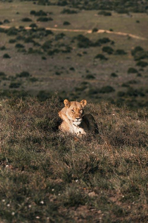 Ilmainen kuvapankkikuva tunnisteilla chordate, eläin, eläinkunta