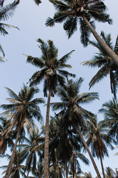 Exotic palm trees growing in tropical resort