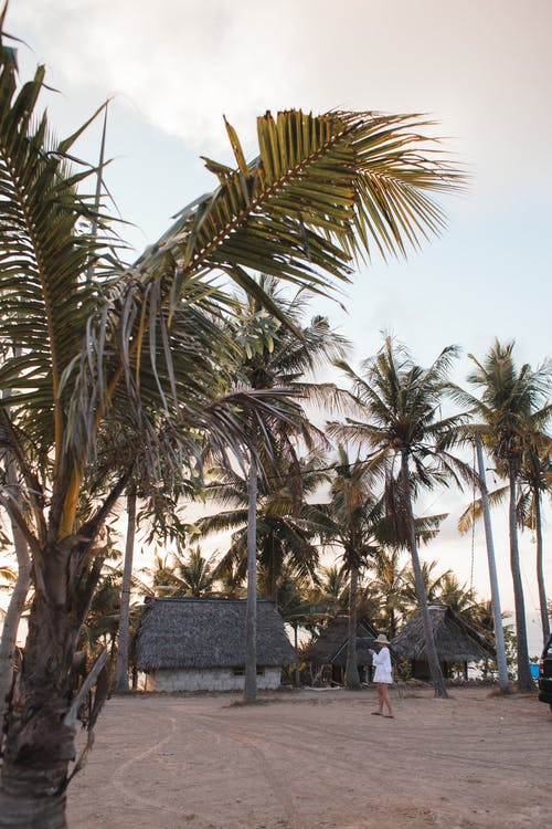Tropical beach with high palms and tourist