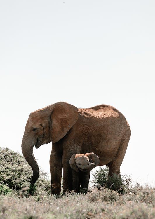açık hava, Afrika, alan içeren Ücretsiz stok fotoğraf