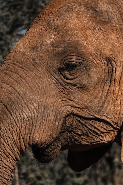 Fotos de stock gratuitas de animal, arrugado, arrugas