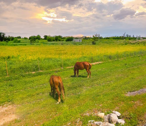 Free stock photo of brown horse, brown horses, clouds, farm