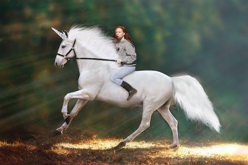 Free stock photo of Unicorn magic dream fantasy