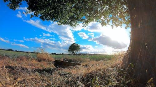 Foto d'estoc gratuïta de camp, camps, núvols, sol
