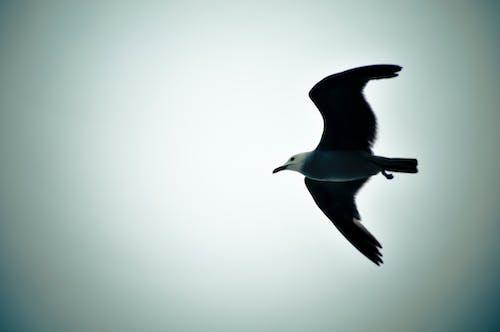 Imagine de stoc gratuită din acoperit de nori, cer, faleză, în zbor