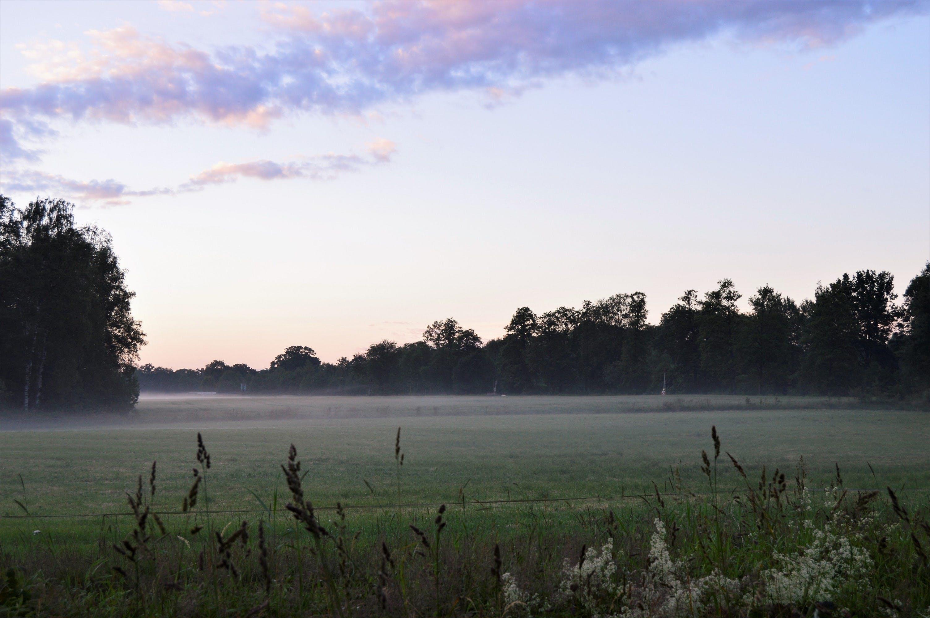 evening, field, fog