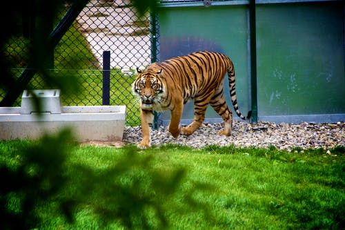 Gratis lagerfoto af dyr, rovdyr, zoo