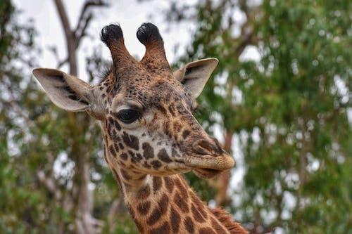 Gratis stockfoto met achtergrond, beest, dierentuin, fotografie