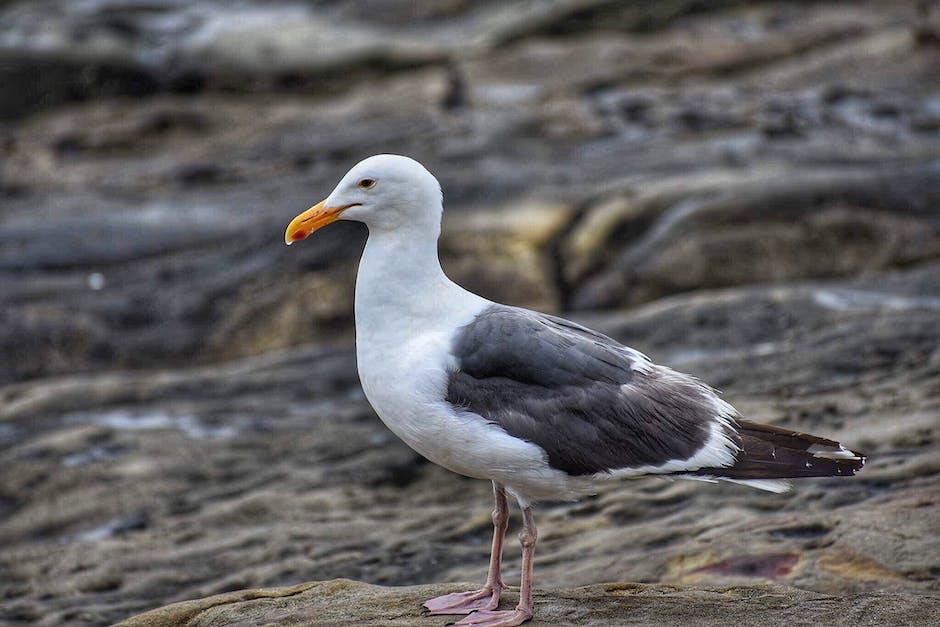New free stock photo of bird, beach, water