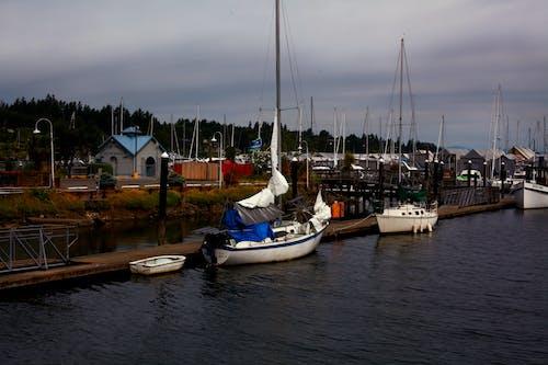 Foto profissional grátis de barcos à vela baía água oceano