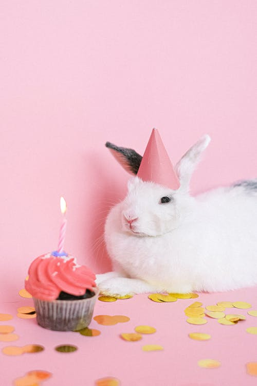 White Rabbit Celebrates Birthday