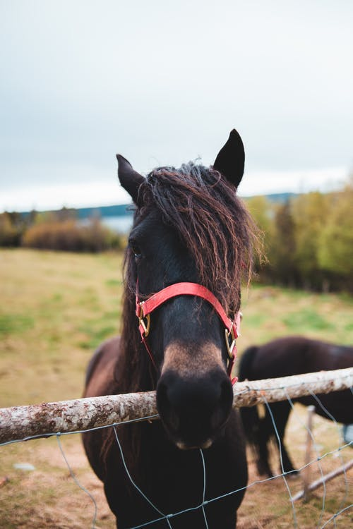 Horse standing near fence in countryside