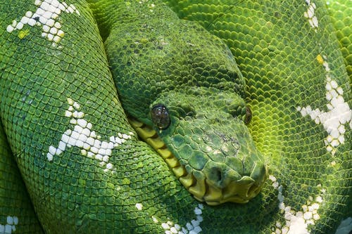Photo of Green and White Snake