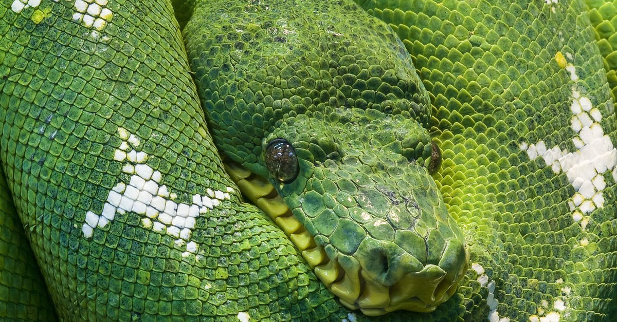 Photo Of Green And White Snake Free Stock Photo