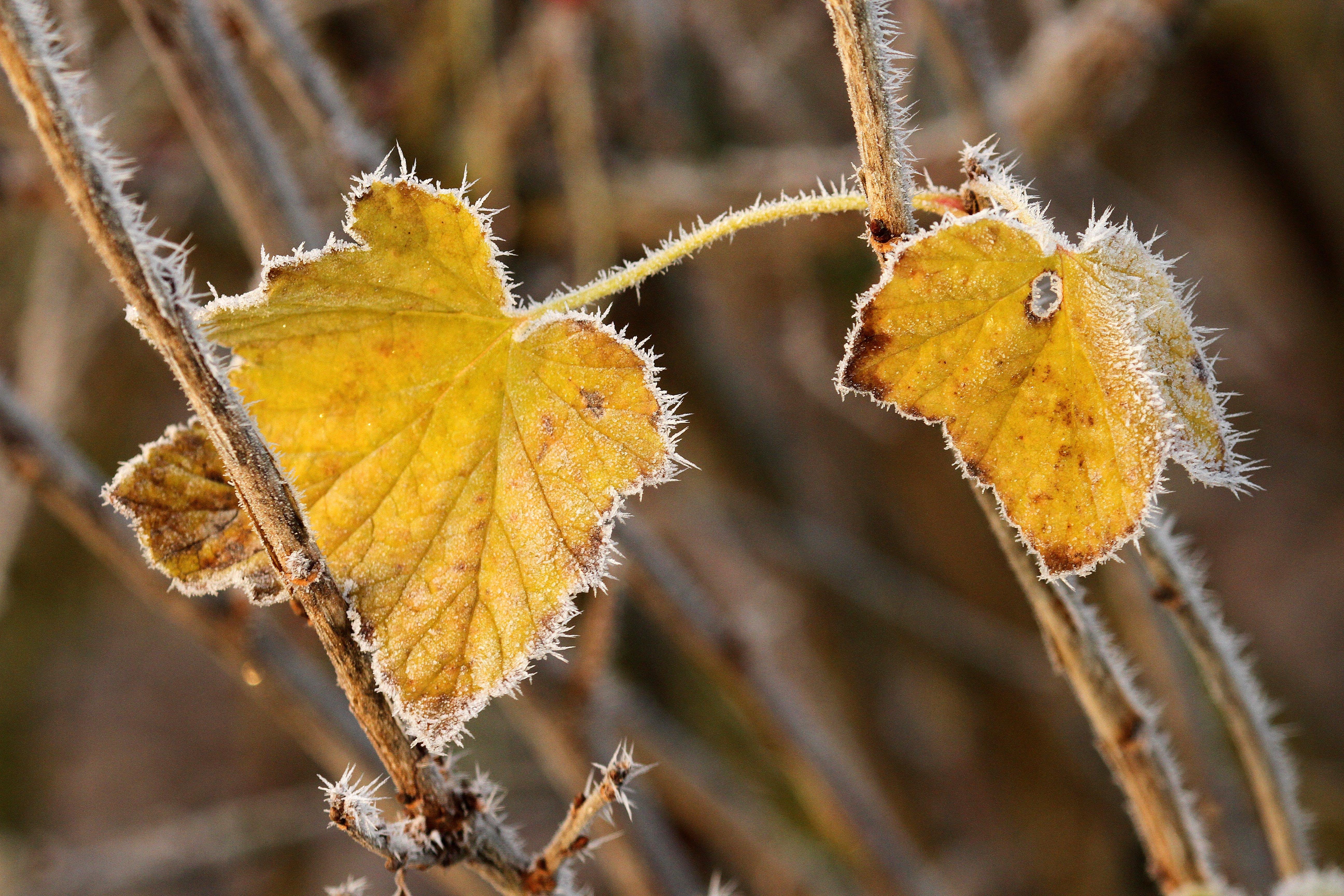 autumn, bush, cold