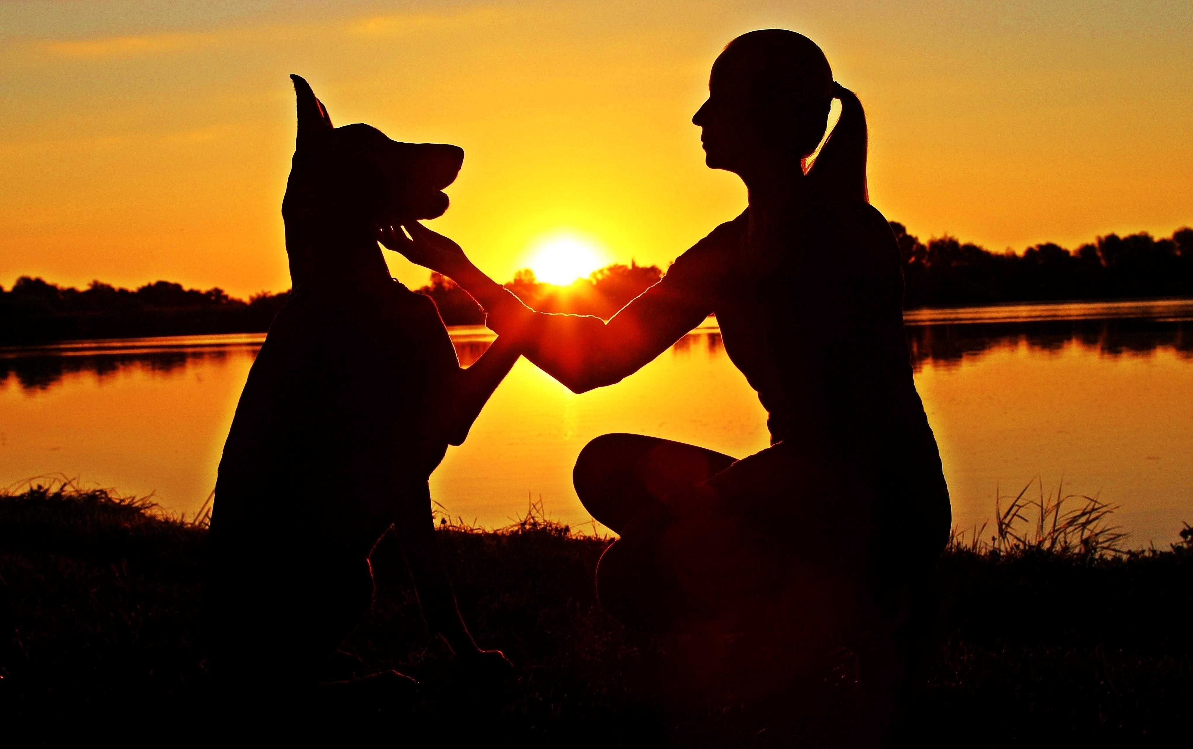 Free stock photo of love, woman, sunrise, silhouette
