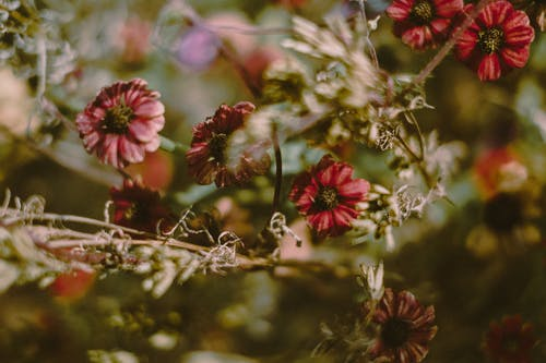 Tender blooming flowers in summer garden