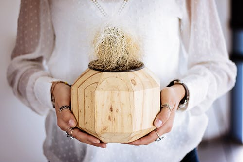 Person Holding Coconut Palm Vase